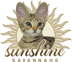 Sunshine Savannahs